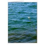 Sola charca de la caña del agua de la flor blanca tarjeton