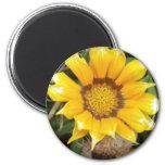 Sola flor amarilla imán de frigorífico