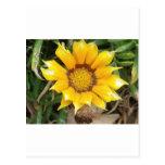 Sola flor amarilla tarjeta postal