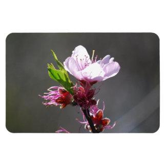 Sola flor de cerezo iman de vinilo