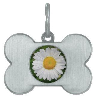 Sola flor de la margarita placas mascota