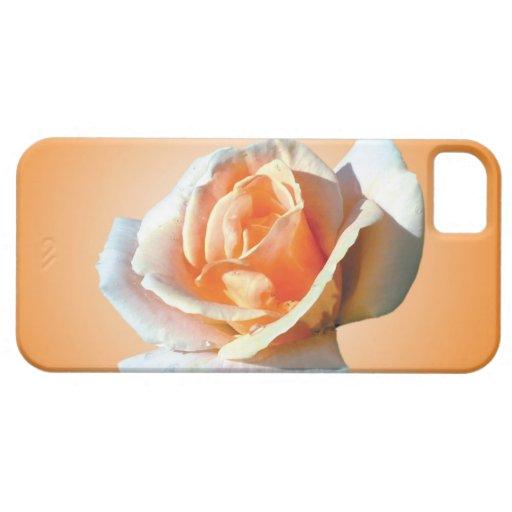sola flor del rosa amarillo en fondo amarillo iPhone 5 coberturas