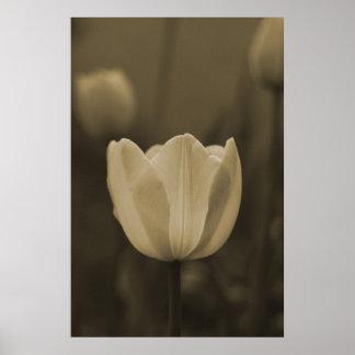 Sola flor del tulipán en tono de la sepia en lona póster