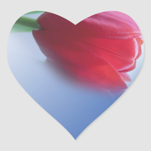 Sola flor roja del tulipán pegatina en forma de corazón