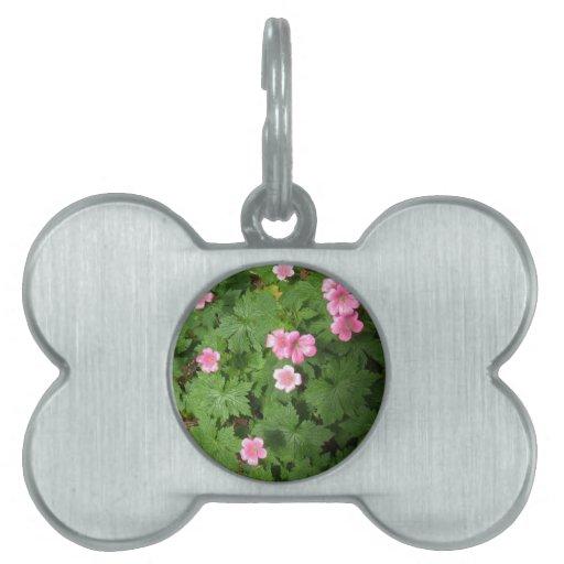 Sola flor rosada de Cranesbill - fotografía Placa Mascota