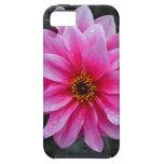 Sola flor rosada hermosa de la dalia iPhone 5 cárcasas