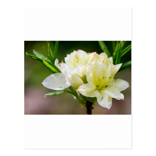 Sola flor salvaje blanca