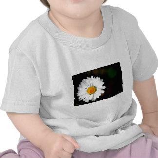 Sola flor salvaje de la margarita camisetas