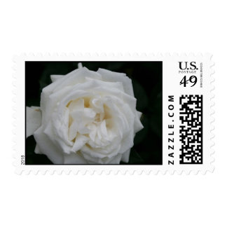 Sola flor Stap del rosa blanco Sello