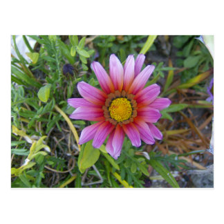 Sola flor tarjeta postal