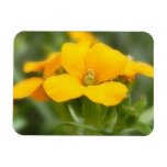 Sola floración - Wallflower Iman De Vinilo