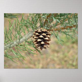Sola impresión del cono del pino poster