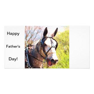 Sola mula gris tarjetas con fotos personalizadas