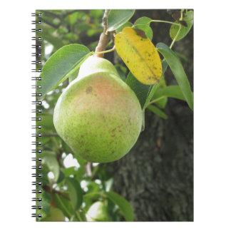 Sola pera verde que cuelga en el árbol libros de apuntes con espiral