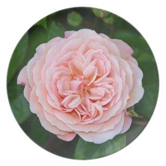 Sola placa rosada hermosa de la impresión del rosa plato
