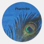 Sola pluma azul del pavo real pegatina redonda
