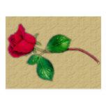 Sola postal del rosa rojo