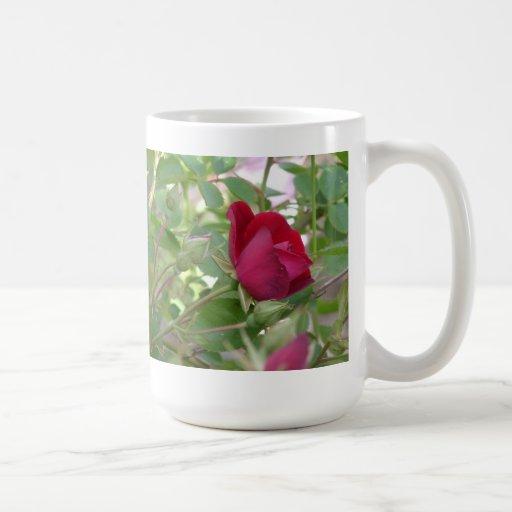 Sola taza del rosa rojo