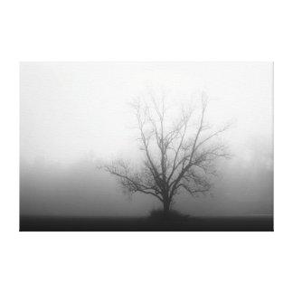 Solamente - el árbol en niebla de la mañana envolv impresión en lienzo