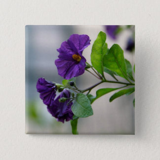 Solanum Rantonnetii With Garden Background Button