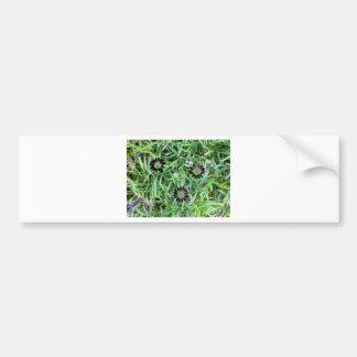 Solar Daisies Bumper Stickers