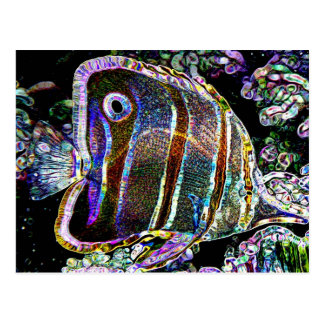 solarfish postales