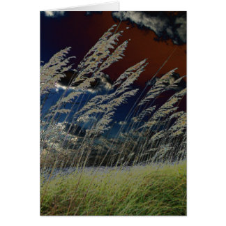 Solarized sea oats picture on florida beach card