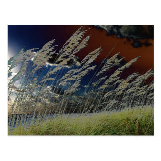 Solarized sea oats picture on florida beach postcard