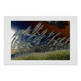 Solarized sea oats picture on florida beach poster