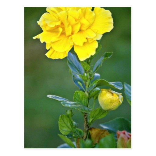 Solas flores amarillas de la floración postal