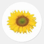Solas flores de la flor del amarillo del girasol pegatinas redondas