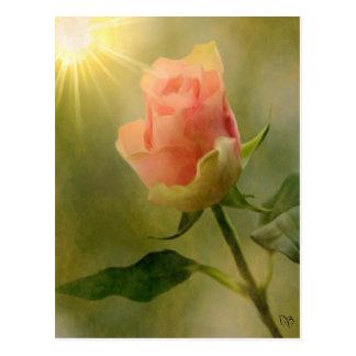 Solas tarjetas color de rosa rosadas tarjetas postales