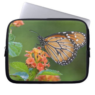 Soldier (Danaus eresimus) butterfly feeding on Computer Sleeve