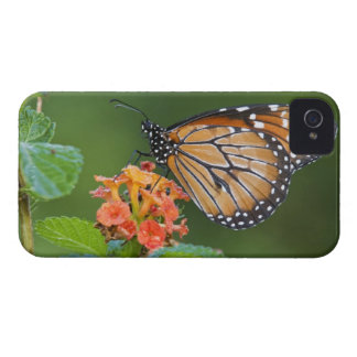 Soldier (Danaus eresimus) butterfly feeding on iPhone 4 Case-Mate Case