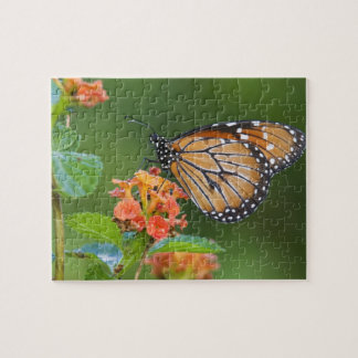 Soldier (Danaus eresimus) butterfly feeding on Jigsaw Puzzle
