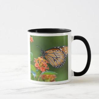 Soldier (Danaus eresimus) butterfly feeding on Mug