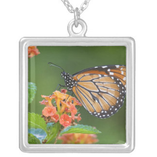 Soldier (Danaus eresimus) butterfly feeding on Square Pendant Necklace