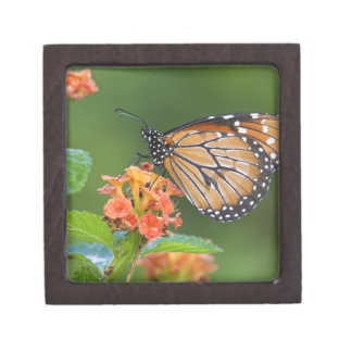 Soldier (Danaus eresimus) butterfly feeding on Premium Keepsake Box