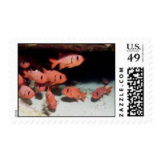 Soldierfish Postage Stamp