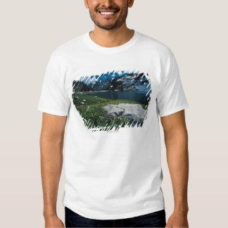 Soledad del lago, parque nacional magnífico de polera