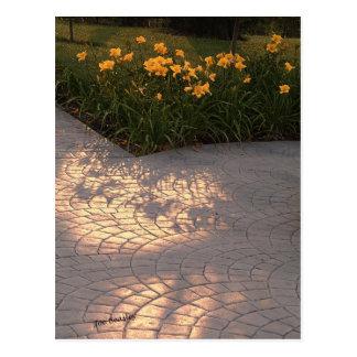 Soleil et fleurs et ombres postcard