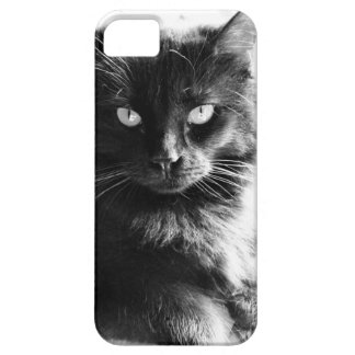 Solid Black Cat, Piercing Eyes! iPhone Cover