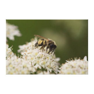 Solitary Bee Canvas Print