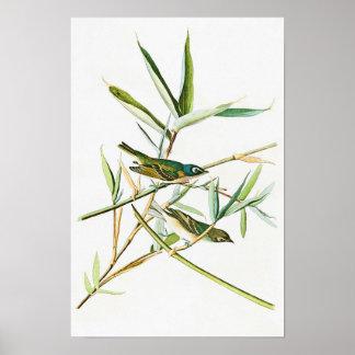 Solitary Flycatcher John Audubon Birds of America Poster