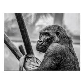 Solitary Gorilla Postcard