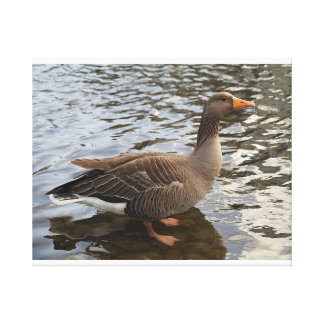 Solitary Greylag Goose canvas