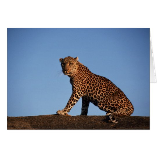 Solitary Leopard Card
