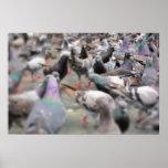Solitary Pigeon Print
