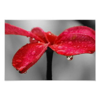 Solitary Red Petal Poster