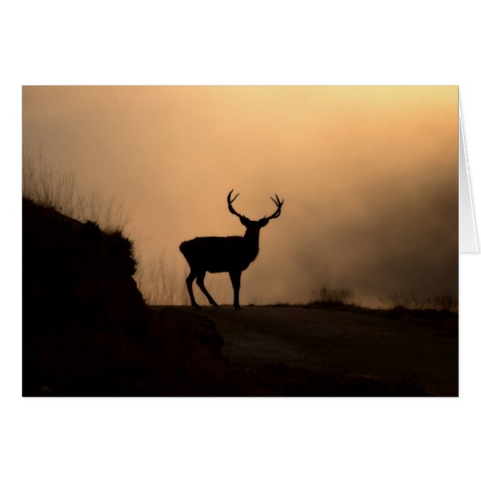 Solitary Red Stag Card